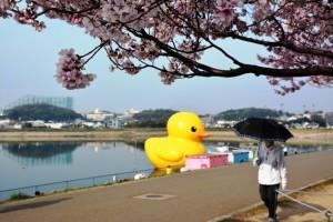 桜を入れて撮影して見ました