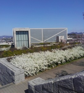今日は気持ちのよい休日でしたね。博物館まわりのユキヤナギは今、怖いほど咲いています。