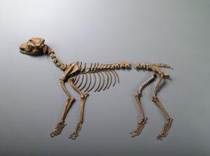 亀井2号犬