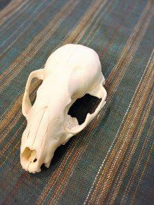 頭がい骨がオブジェのようにかっこよく撮れた1枚