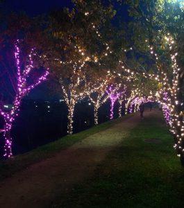 11月7日(水)午後5時半ごろの桜まつりライトアップ